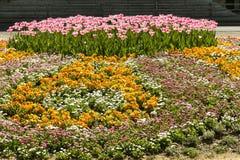 Kwiatu wzór wiosna Obraz Stock