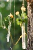 Kwiatu wzrost Fotografia Stock