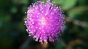 kwiatu zakończenia kwiat lub błękitny kwiatu tło obrazy stock