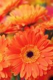 Kwiatu zakończenie Obraz Stock