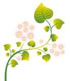 kwiatu zieleni liść menchie dzikie Zdjęcie Royalty Free