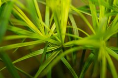 kwiatu zieleni tekstura Zdjęcie Stock