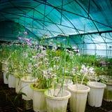 kwiatu zielonego domu pepiniery orchidea Zdjęcie Royalty Free
