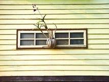 Kwiatu zrozumienie ściana Obraz Stock
