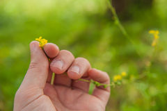 Kwiatu zrywanie Zdjęcia Stock