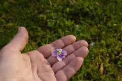 Kwiatu zrywanie obrazy stock