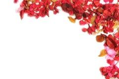 kwiatów płatki Zdjęcia Stock