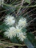 kwiaty! ðŸ'˜ Obraz Stock