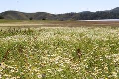 kwiaty łąkę zdjęcia stock