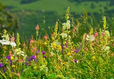 kwiaty łąkę obraz stock