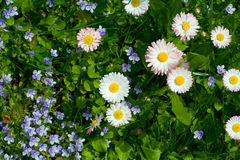 kwiaty łąkę fotografia stock