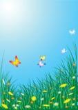 kwiaty łąkową wiosny Fotografia Royalty Free