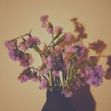 kwiaty ' zdjęcia stock