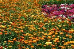 kwiaty Zdjęcia Royalty Free