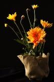 Kwiaty Fotografia Royalty Free
