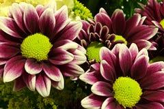 Kwiaty Zdjęcie Royalty Free