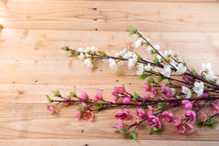 Kwiaty Obraz Stock