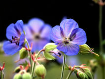 kwiaty 6 owad nad Zdjęcia Stock