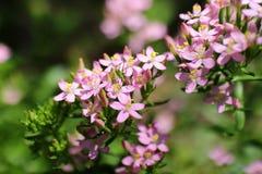 Kwiaty Zdjęcie Stock