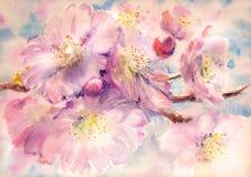 Kwiaty ilustracji
