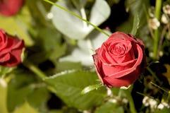 Kwiaty 8 Obraz Royalty Free