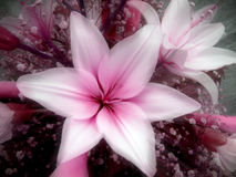 kwiaty Zdjęcia Stock