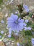 Kwiaty Obrazy Stock