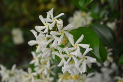 Kwiaty (1) Obrazy Stock