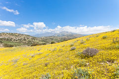 Kwiaty Agia Galini Fotografia Stock