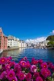 Kwiaty Alesund Fotografia Royalty Free