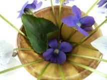 Kwiaty altówki sororia z jeden zielonym urlopem w wazie zdjęcia royalty free