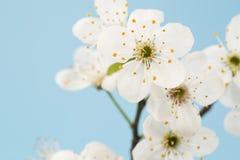 kwiaty azalii blisko dof p?ytkie pojawi si? kwiat zdjęcie royalty free
