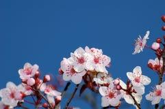 kwiaty błękitowi przeciwko jabłczanemu deep sky Zdjęcia Stock