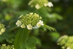 Kwiaty blisko domu Zdjęcia Stock