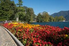 Kwiaty blisko jeziora Lugano Zdjęcie Stock
