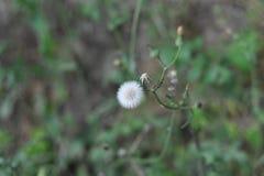 Kwiaty blisko siklawy Fotografia Stock