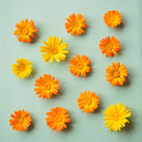Kwiaty calendula Zdjęcia Royalty Free