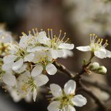 kwiaty czeka pszczoły fotografia stock