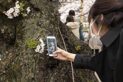 kwiaty czereśniowego Tokio zdjęcie stock