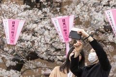 kwiaty czereśniowego Tokio obraz stock