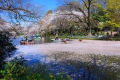 kwiaty czereśniowego Tokio Fotografia Royalty Free