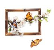 Kwiaty czereśniowi i monarchiczni motyle w bambus ramie Zdjęcia Royalty Free