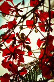 Kwiaty czerwień Fotografia Royalty Free