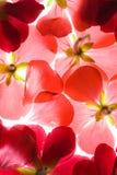 kwiaty czerwone tło