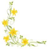 Kwiaty, daffodils Obraz Royalty Free