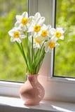 Kwiaty, daffodils na okno, Fotografia Stock