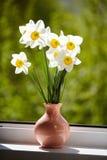 Kwiaty, daffodils na okno, Obrazy Royalty Free