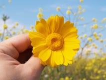 kwiaty dają Fotografia Royalty Free