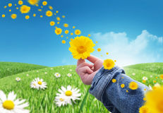 kwiaty dają Zdjęcie Royalty Free