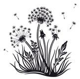 Kwiaty, dandelion Zdjęcie Stock